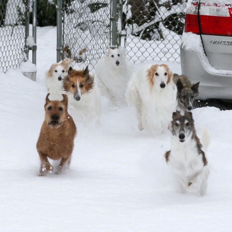 snow 2-4-19-6799-2