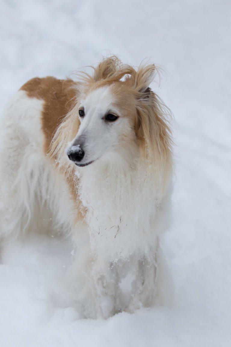 snow 2-4-19-6884